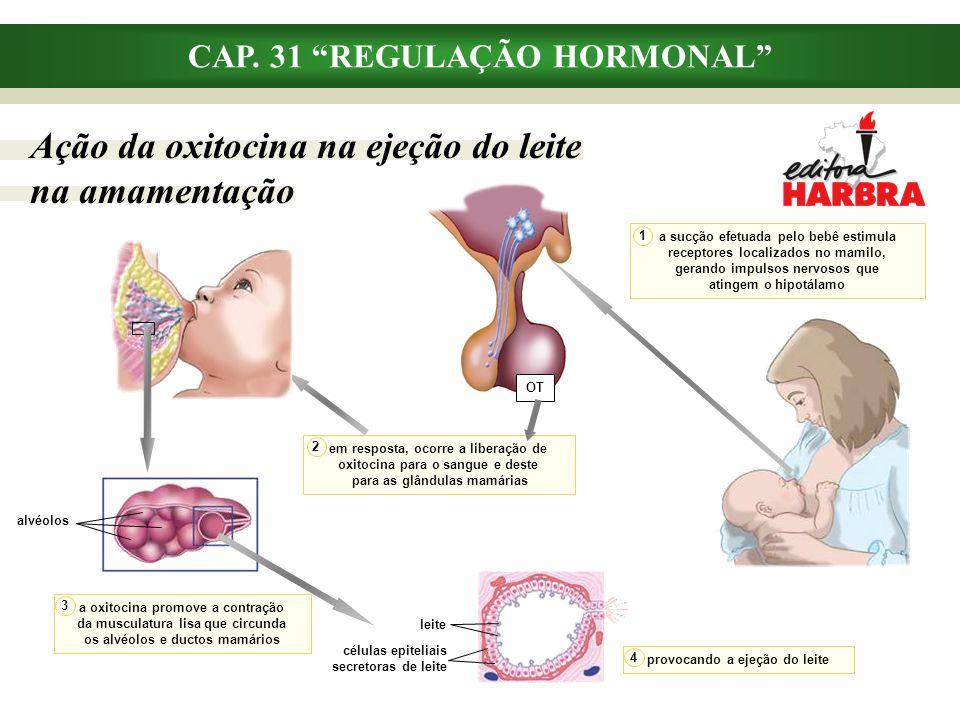 """CAP. 31 """"REGULAÇÃO HORMONAL"""" Ação da oxitocina na ejeção do leite na amamentação em resposta, ocorre a liberação de oxitocina para o sangue e deste pa"""
