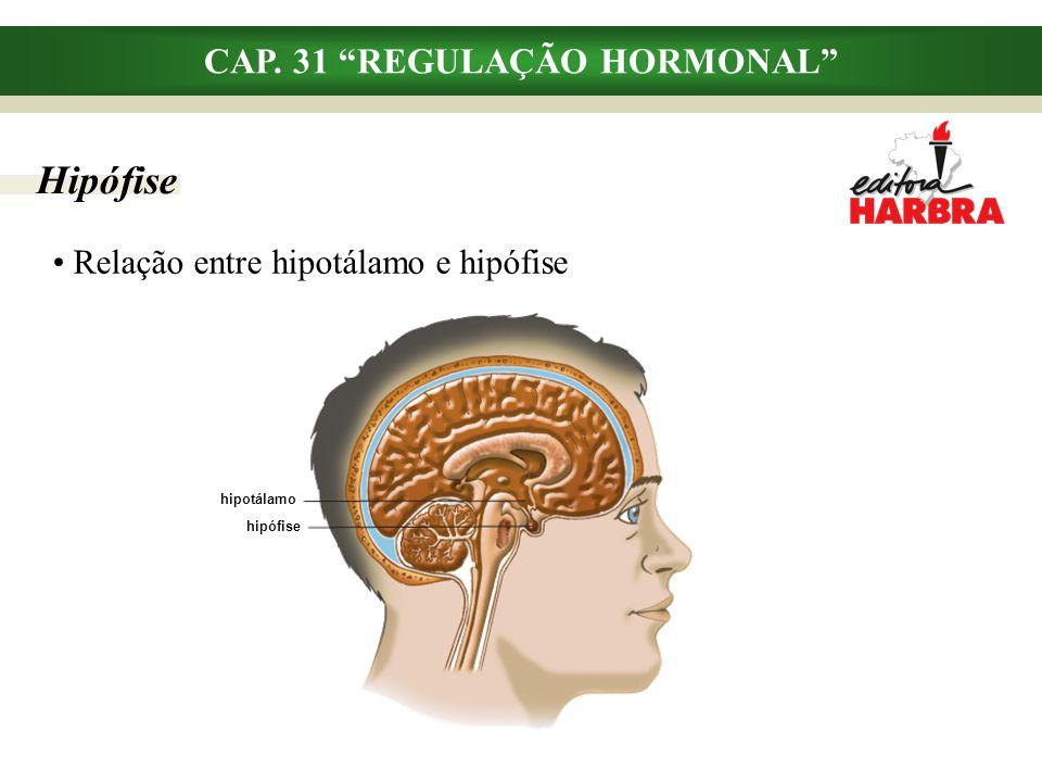 """hipotálamo hipófise CAP. 31 """"REGULAÇÃO HORMONAL"""" Hipófise Relação entre hipotálamo e hipófise"""