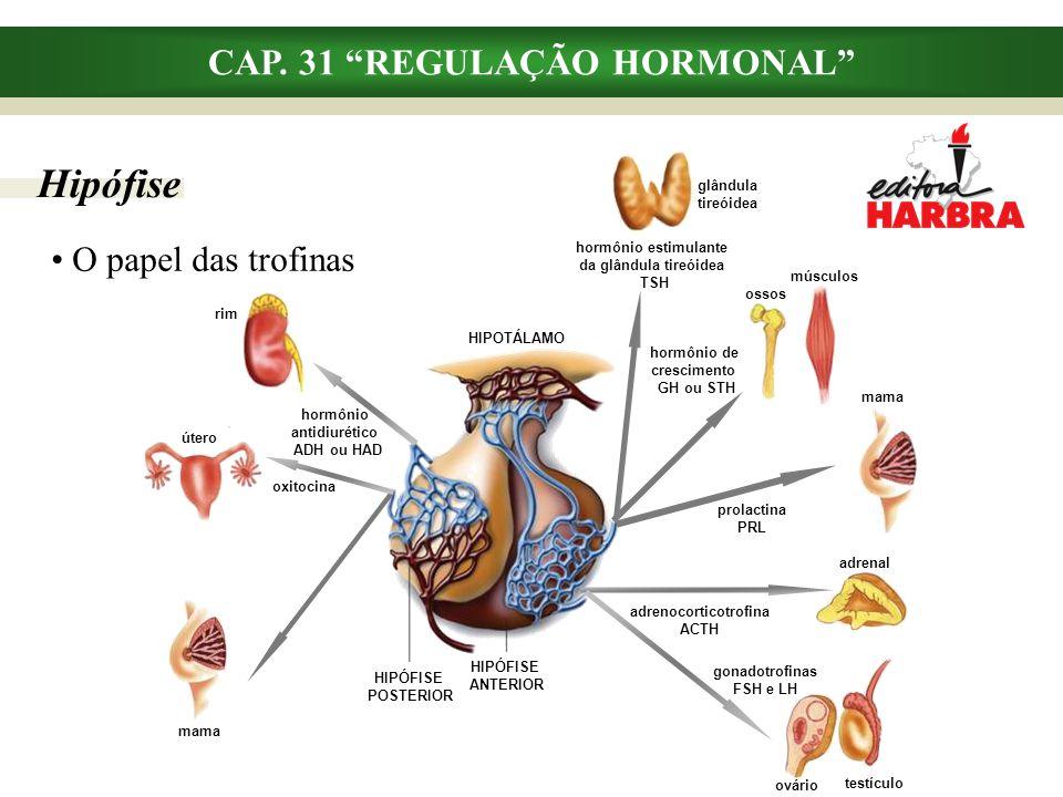 """CAP. 31 """"REGULAÇÃO HORMONAL"""" O papel das trofinas adrenal adrenocorticotrofina ACTH Hipófise testículo ovário gonadotrofinas FSH e LH útero oxitocina"""