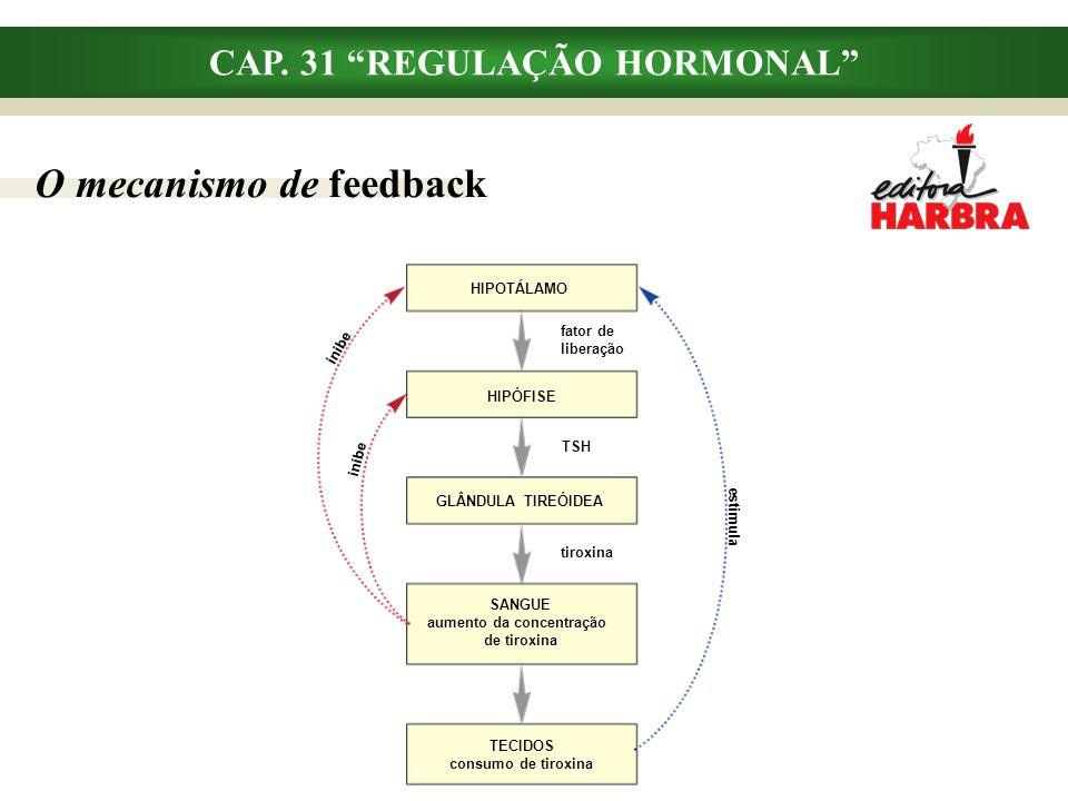 """CAP. 31 """"REGULAÇÃO HORMONAL"""" O mecanismo de feedback HIPOTÁLAMO HIPÓFISE GLÂNDULA TIREÓIDEA SANGUE aumento da concentração de tiroxina inibe TSH tirox"""