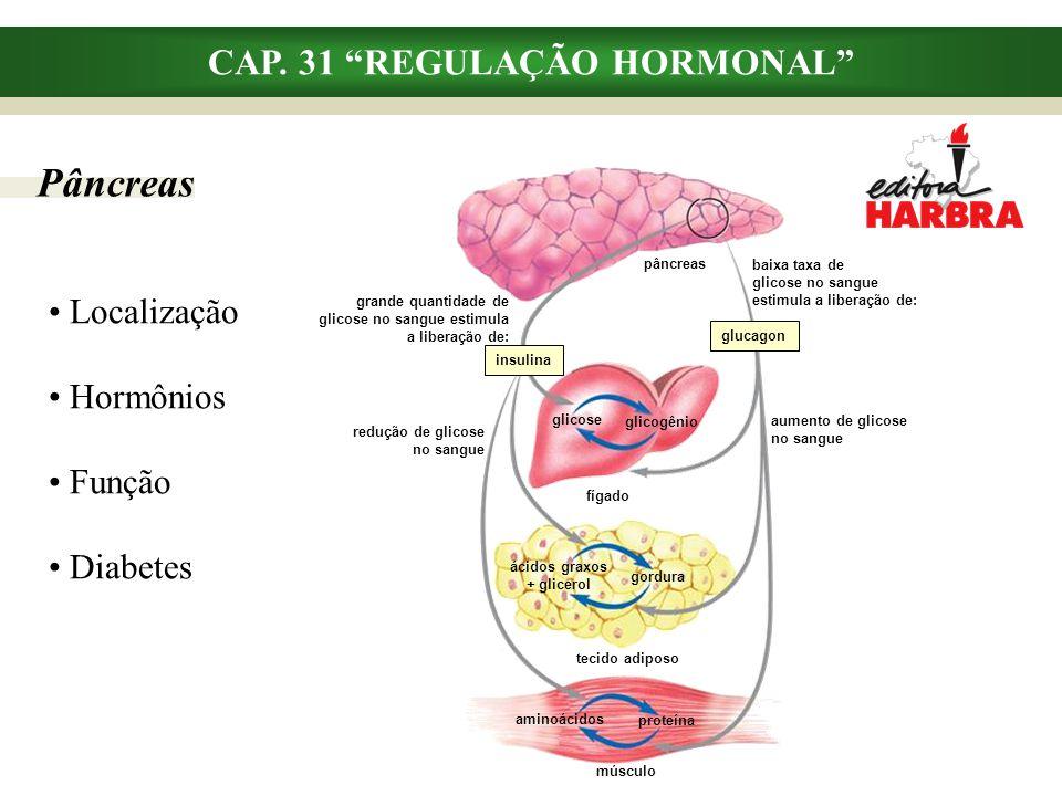 """CAP. 31 """"REGULAÇÃO HORMONAL"""" Pâncreas Localização Hormônios Função Diabetes pâncreas insulina glucagon glicose glicogênio fígado ácidos graxos + glice"""