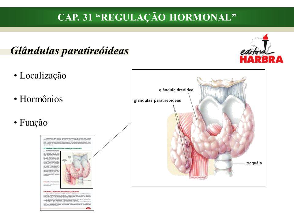 """CAP. 31 """"REGULAÇÃO HORMONAL"""" Glândulas paratireóideas Localização Hormônios Função glândula tireóidea glândulas paratireóideas traquéia"""