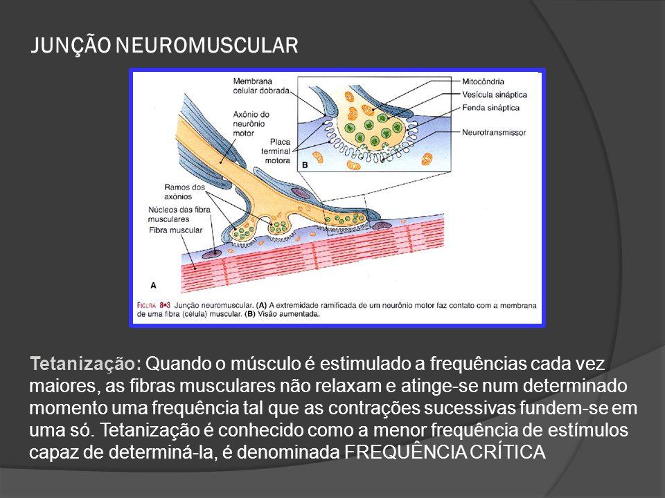 JUNÇÃO NEUROMUSCULAR Tetanização: Quando o músculo é estimulado a frequências cada vez maiores, as fibras musculares não relaxam e atinge-se num deter