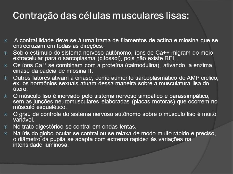 Contração das células musculares lisas:  A contratilidade deve-se à uma trama de filamentos de actina e miosina que se entrecruzam em todas as direções.