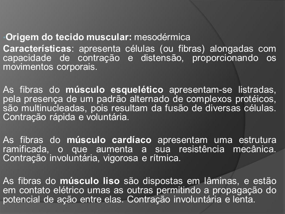 Origem do tecido muscular: mesodérmica Características: apresenta células (ou fibras) alongadas com capacidade de contração e distensão, proporcionando os movimentos corporais.