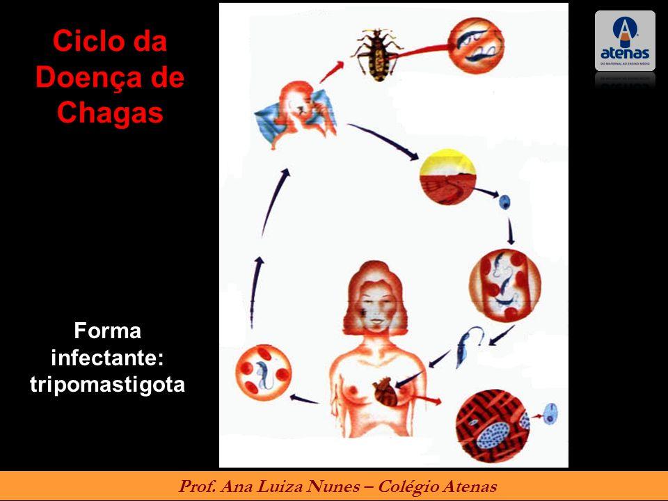 Ciclo da Doença de Chagas Forma infectante: tripomastigota Prof. Ana Luiza Nunes – Colégio Atenas