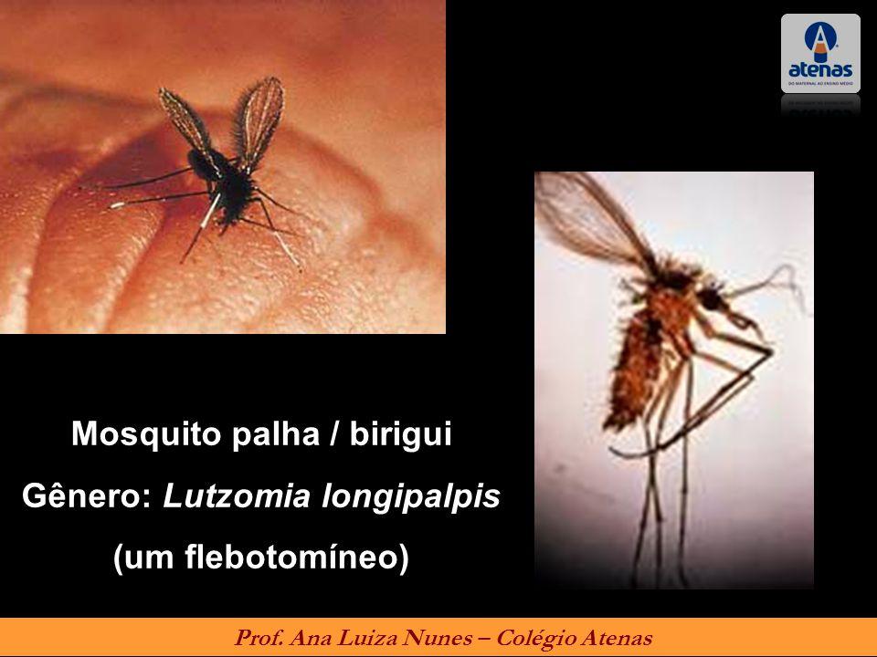 Mosquito palha / birigui Gênero: Lutzomia longipalpis (um flebotomíneo) Prof. Ana Luiza Nunes – Colégio Atenas