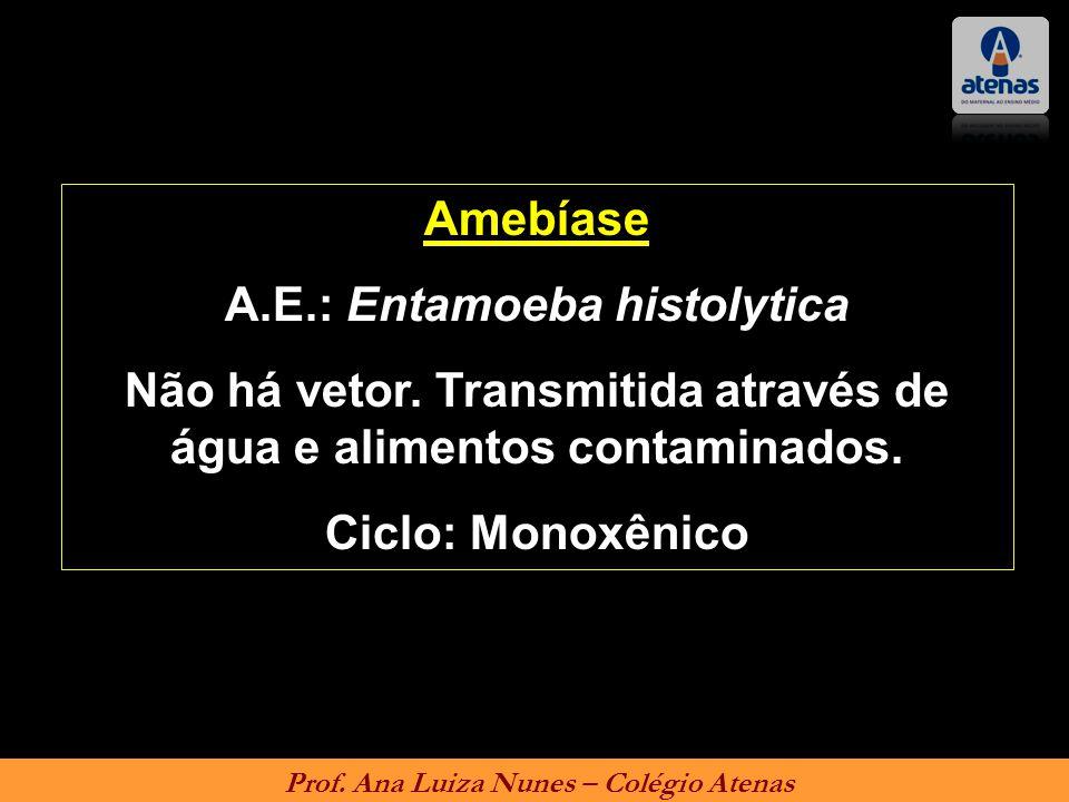 Amebíase A.E.: Entamoeba histolytica Não há vetor. Transmitida através de água e alimentos contaminados. Ciclo: Monoxênico Prof. Ana Luiza Nunes – Col