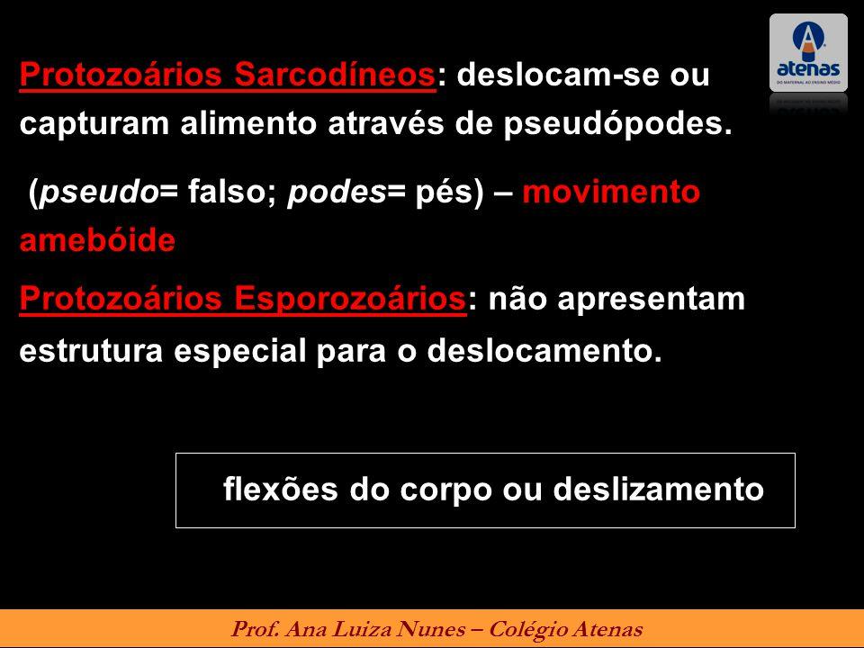 Protozoários Sarcodíneos: deslocam-se ou capturam alimento através de pseudópodes. (pseudo= falso; podes= pés) – movimento amebóide Protozoários Espor
