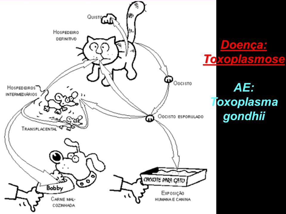 Doença: Toxoplasmose AE: Toxoplasma gondhii