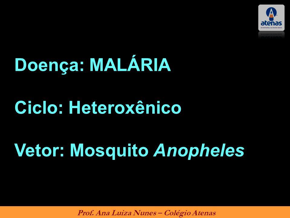 Prof. Ana Luiza Nunes – Colégio Atenas Doença: MALÁRIA Ciclo: Heteroxênico Vetor: Mosquito Anopheles