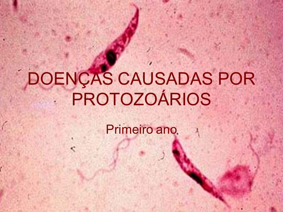 Leishmania brasiliensis