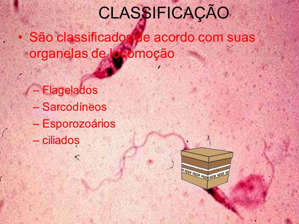 CLASSIFICAÇÃO São classificados de acordo com suas organelas de locomoção –Flagelados –Sarcodíneos –Esporozoários –ciliados