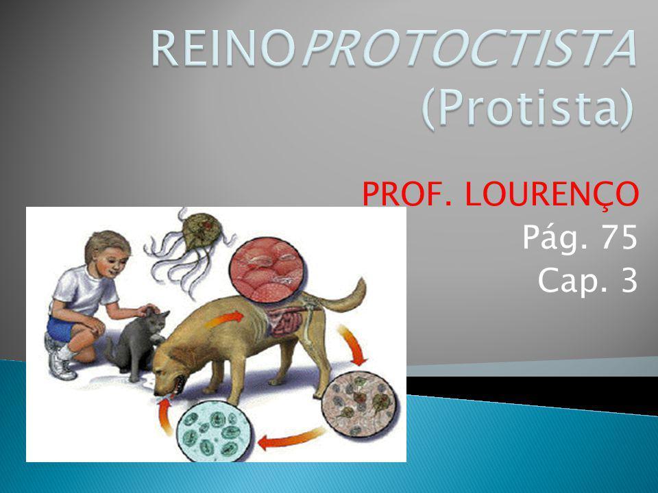 Protozoário: Entamoeba histolytica (Rizópode parasita) Entamoeba histolyticaCisto
