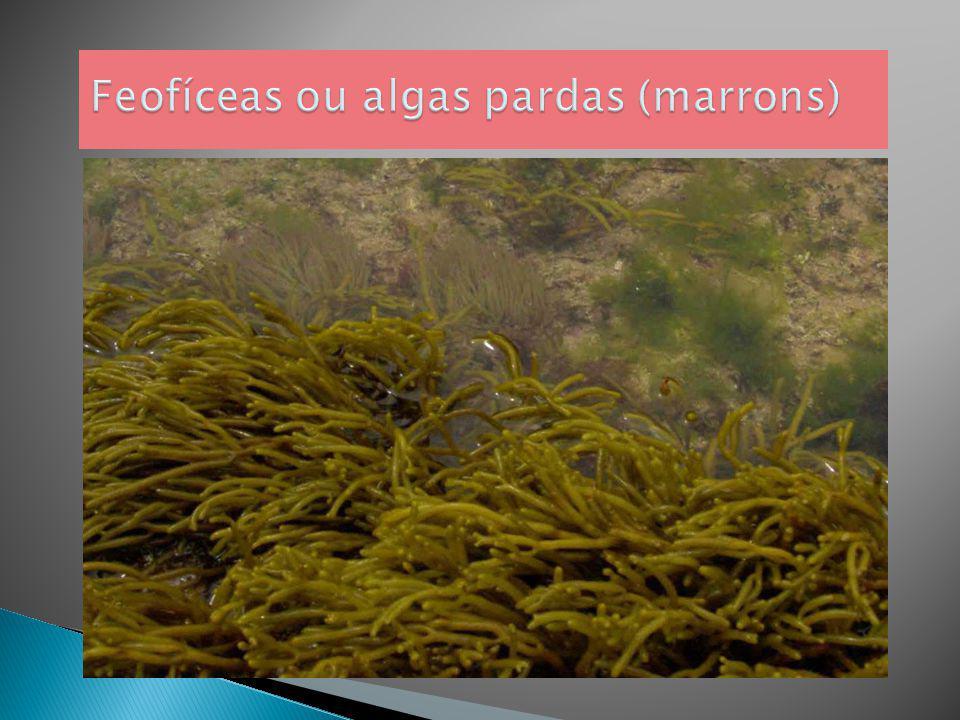 Algas verdes têm beta- caroteno.