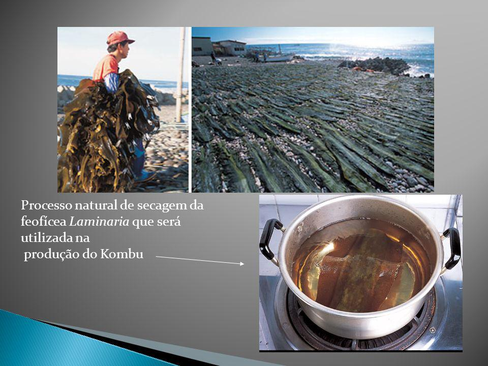 Feofícea chamada Laminaria, sendo secada para fazer kombu