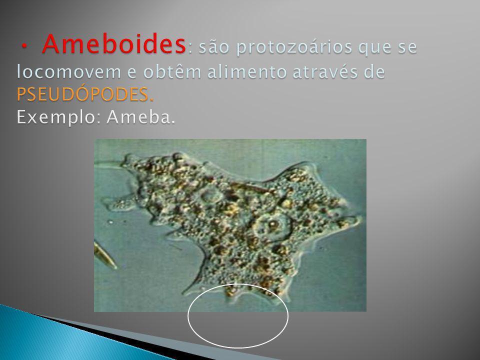 Os protozoários são classificados em quatro grupos segundo o TIPO e a PRESENÇA OU NÃO DE ESTRUTURAS DE LOCOMOÇÃO: ESPOROZOÁRIOS : são protozoários que