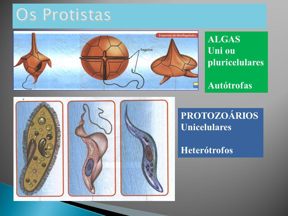 ALGAS Uni ou pluricelulares Autótrofas PROTOZOÁRIOS Unicelulares Heterótrofos