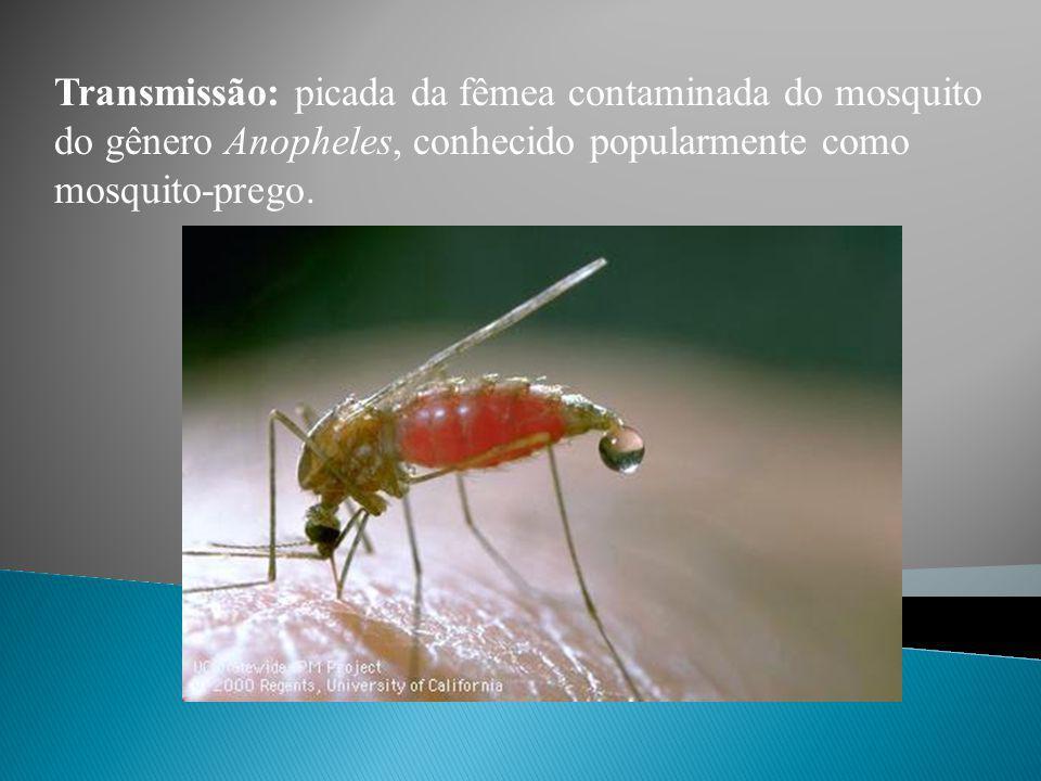 Protozoário: Plasmodium (Esporozoário parasita).