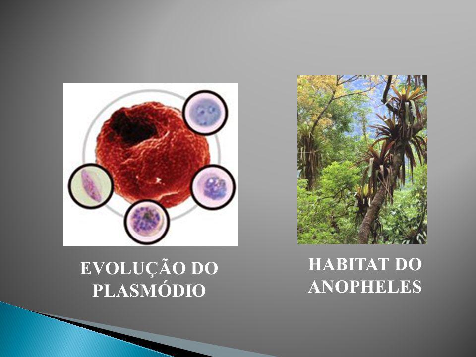Sintomas: febre alta. Formas de Prevenção da Doença: Pulverização de inseticidas em córregos, lagos e poças de água parada para matar as larvas do mos
