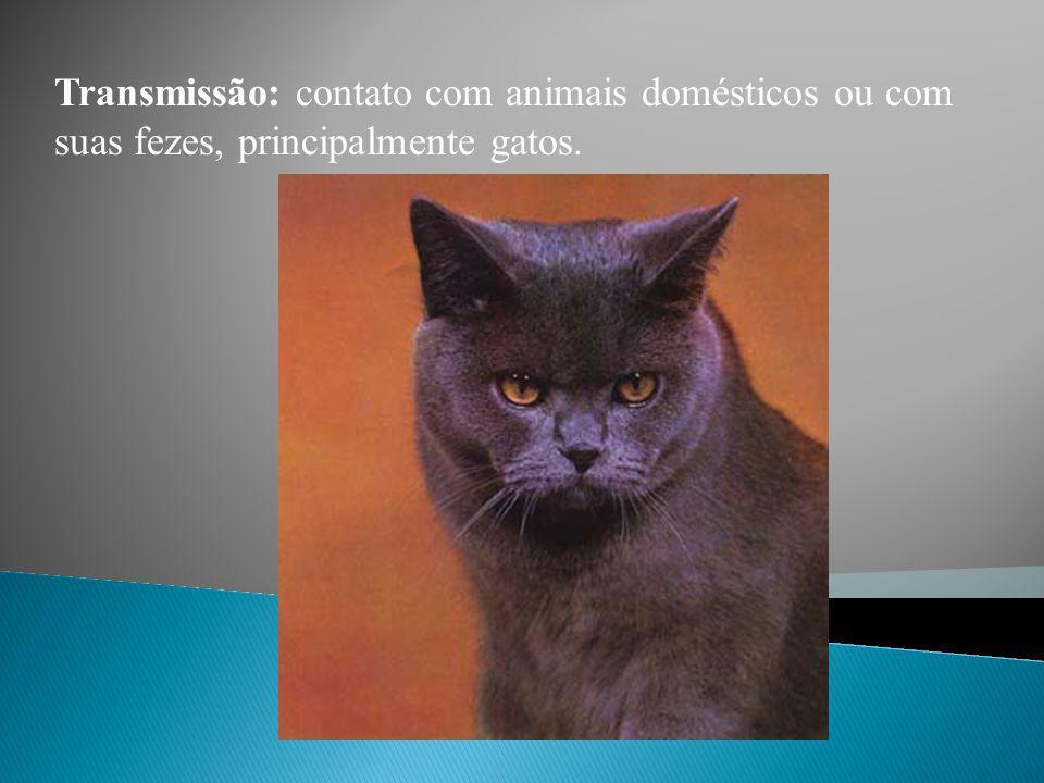 Protozoário: Toxoplasma gondii (Esporozoário parasita). Cisto Esporozoário