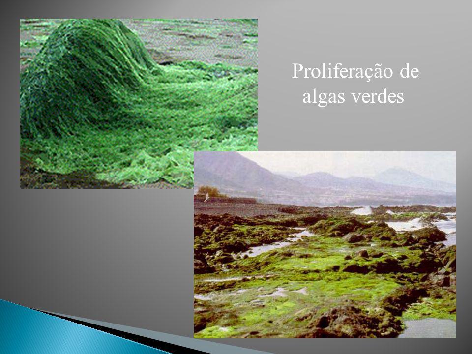 Volvox aureus Ulva sp. Spirogyra
