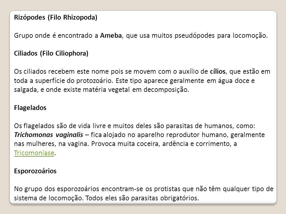 Rizópodes (Filo Rhizopoda) Grupo onde é encontrado a Ameba, que usa muitos pseudópodes para locomoção. Ciliados (Filo Ciliophora) Os ciliados recebem
