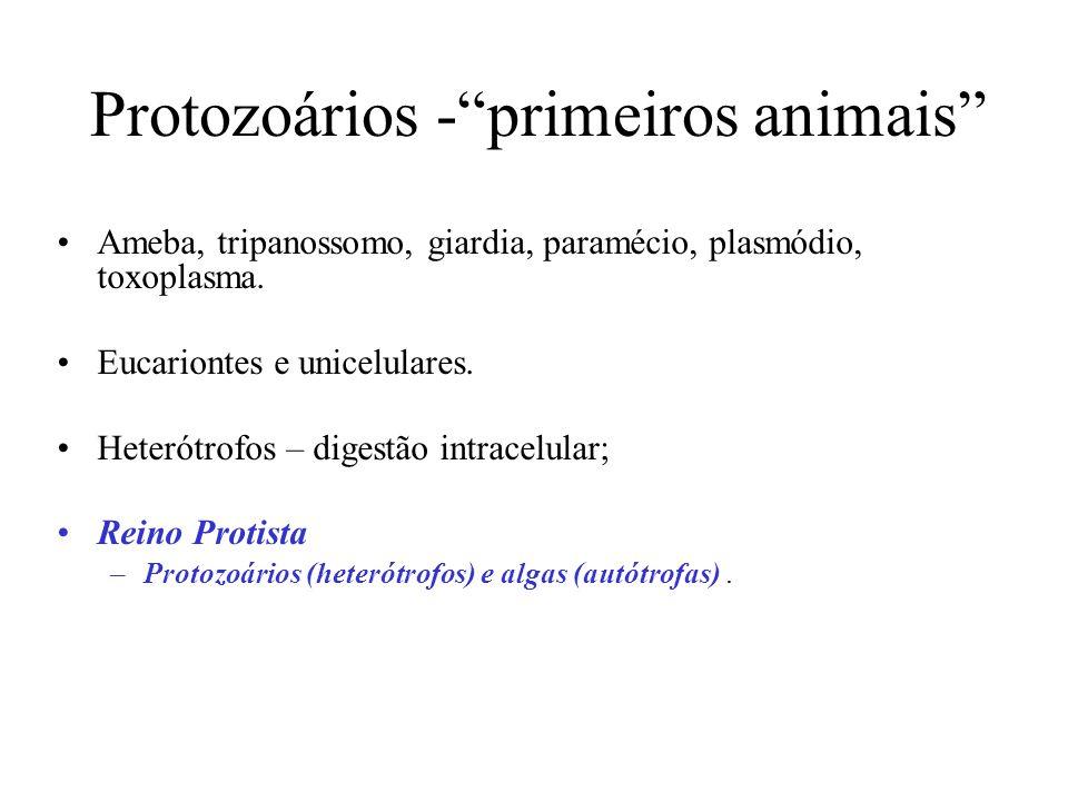 Protozoários - primeiros animais Ameba, tripanossomo, giardia, paramécio, plasmódio, toxoplasma.