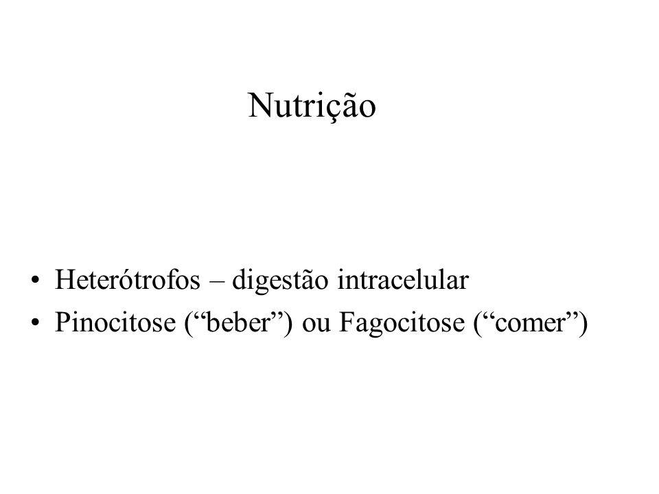 Heterótrofos – digestão intracelular Pinocitose ( beber ) ou Fagocitose ( comer ) Nutrição