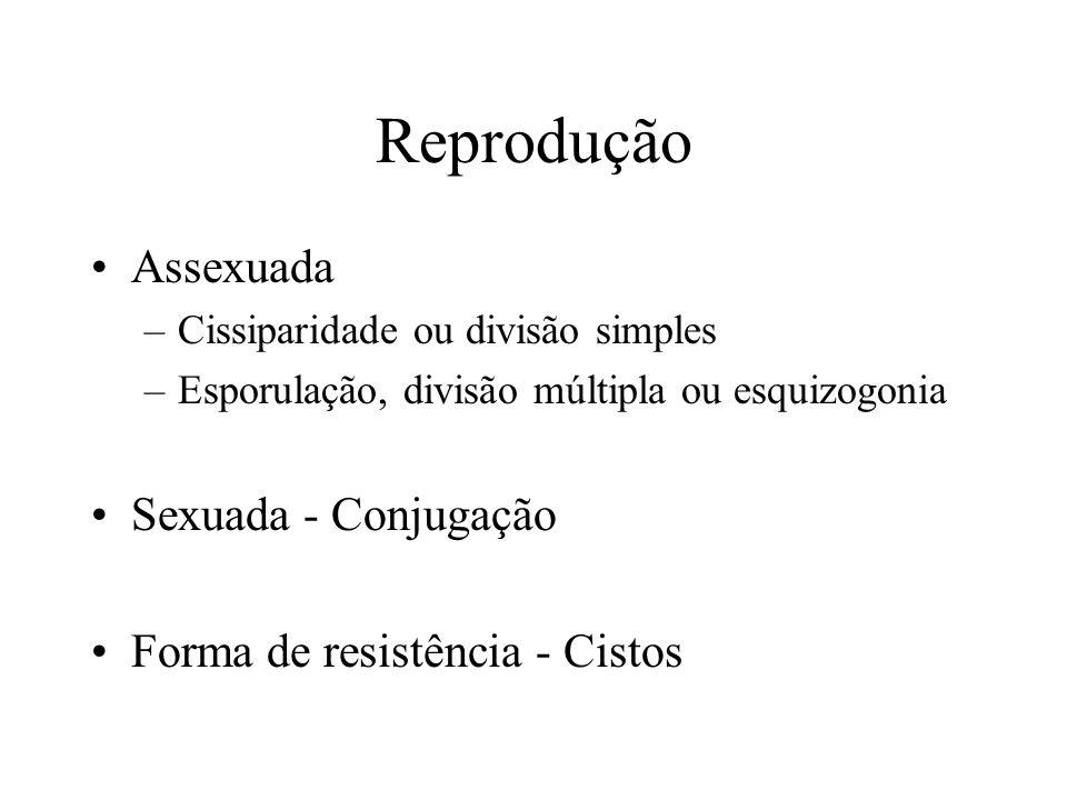 Reprodução Assexuada –Cissiparidade ou divisão simples –Esporulação, divisão múltipla ou esquizogonia Sexuada - Conjugação Forma de resistência - Cistos