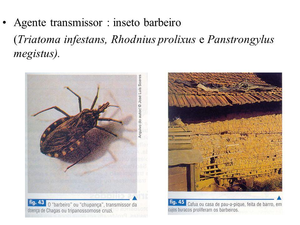 Agente transmissor : inseto barbeiro (Triatoma infestans, Rhodnius prolixus e Panstrongylus megistus).