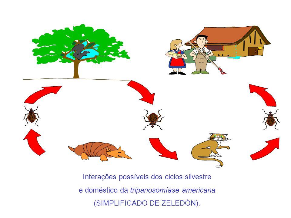 Interações possíveis dos ciclos silvestre e doméstico da tripanosomíase americana (SIMPLIFICADO DE ZELEDÓN).