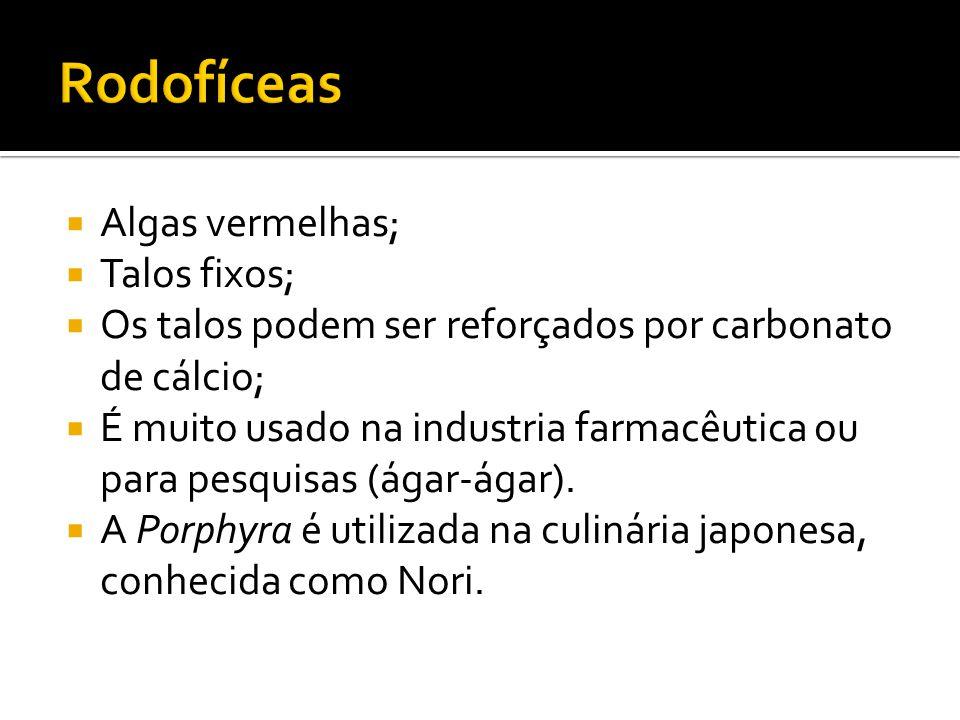  Algas vermelhas;  Talos fixos;  Os talos podem ser reforçados por carbonato de cálcio;  É muito usado na industria farmacêutica ou para pesquisas (ágar-ágar).