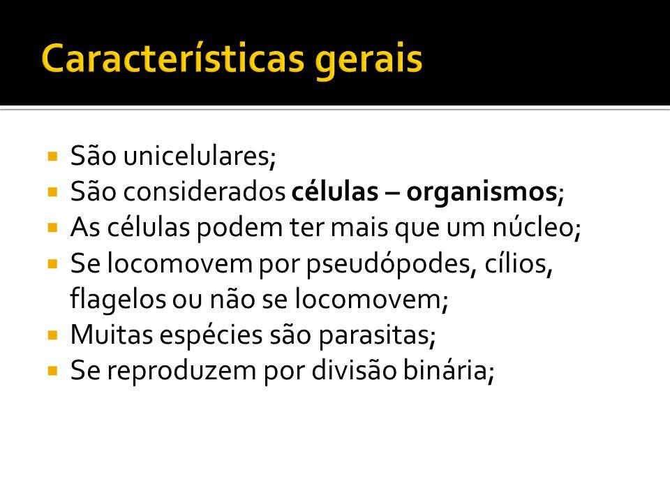 São unicelulares;  São considerados células – organismos;  As células podem ter mais que um núcleo;  Se locomovem por pseudópodes, cílios, flagelos ou não se locomovem;  Muitas espécies são parasitas;  Se reproduzem por divisão binária;