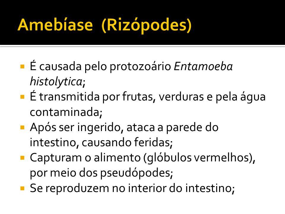  É causada pelo protozoário Entamoeba histolytica;  É transmitida por frutas, verduras e pela água contaminada;  Após ser ingerido, ataca a parede do intestino, causando feridas;  Capturam o alimento (glóbulos vermelhos), por meio dos pseudópodes;  Se reproduzem no interior do intestino;