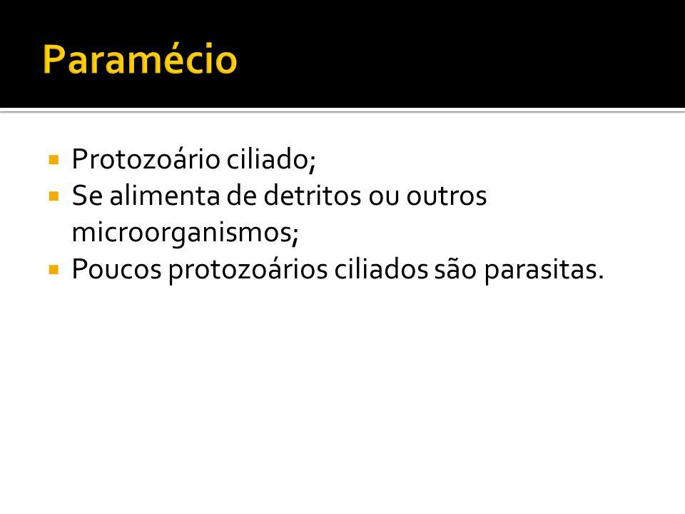  Protozoário ciliado;  Se alimenta de detritos ou outros microorganismos;  Poucos protozoários ciliados são parasitas.