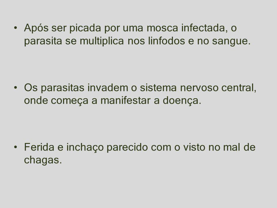 Após ser picada por uma mosca infectada, o parasita se multiplica nos linfodos e no sangue. Os parasitas invadem o sistema nervoso central, onde começ