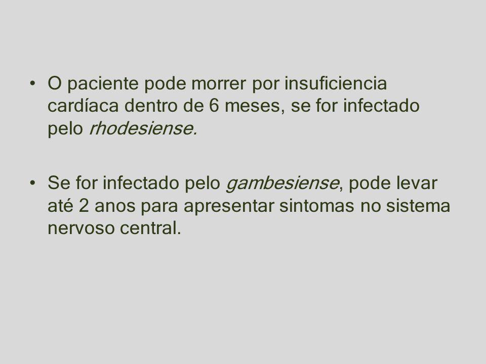O paciente pode morrer por insuficiencia cardíaca dentro de 6 meses, se for infectado pelo rhodesiense. Se for infectado pelo gambesiense, pode levar