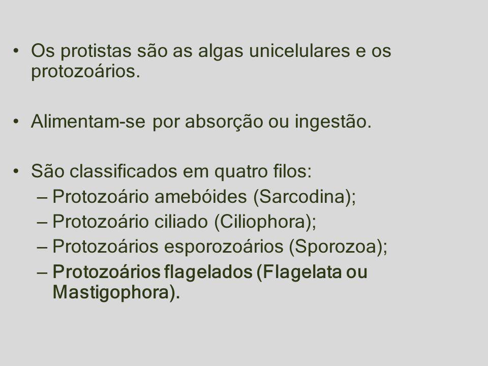 Os protistas são as algas unicelulares e os protozoários. Alimentam-se por absorção ou ingestão. São classificados em quatro filos: – Protozoário ameb