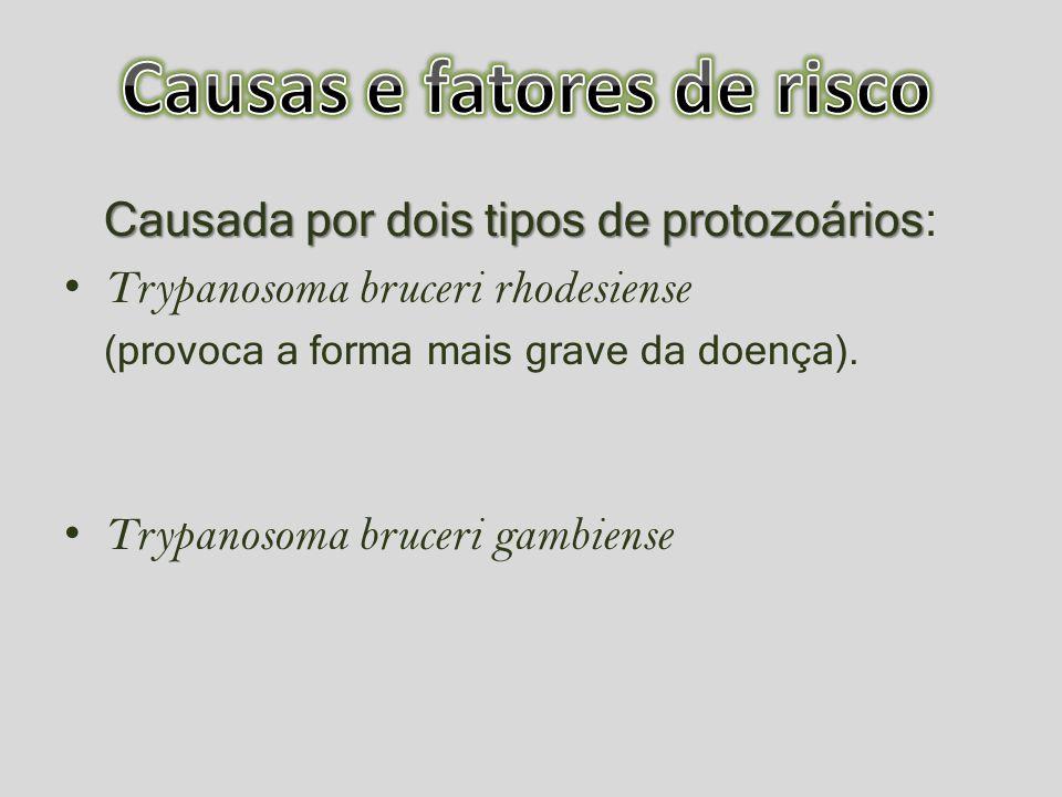 Causada por dois tipos de protozoários Causada por dois tipos de protozoários: Trypanosoma bruceri rhodesiense (provoca a forma mais grave da doença).
