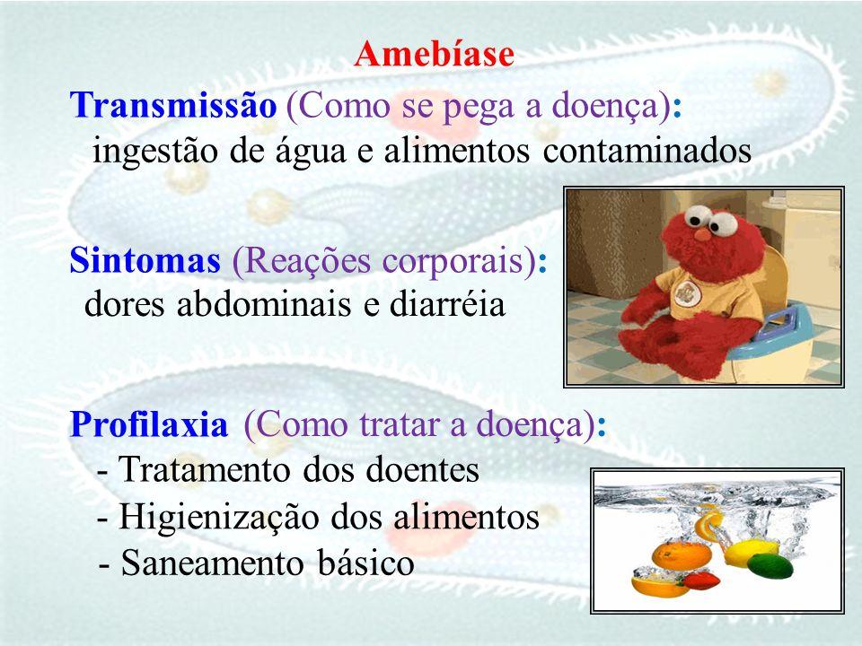 Transmissão ingestão de água e alimentos contaminados Profilaxia - Higienização dos alimentos - Tratamento dos doentes Sintomas dores abdominais e dia