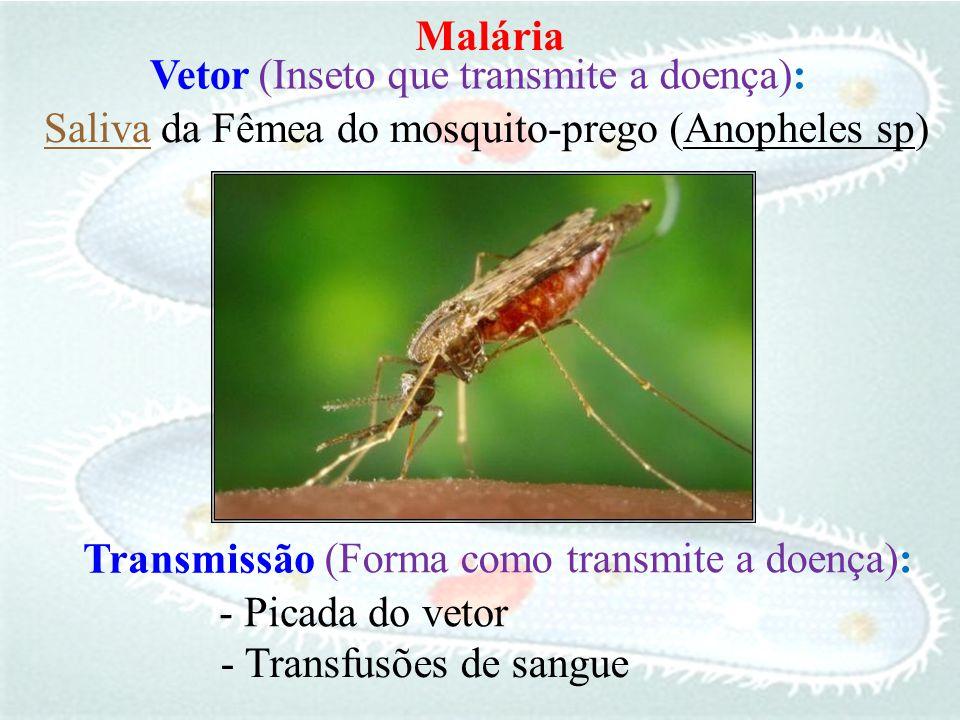 (Anopheles sp)Saliva da Fêmea do mosquito-prego Transmissão - Picada do vetor - Transfusões de sangue (Inseto que transmite a doença): Vetor (Forma co
