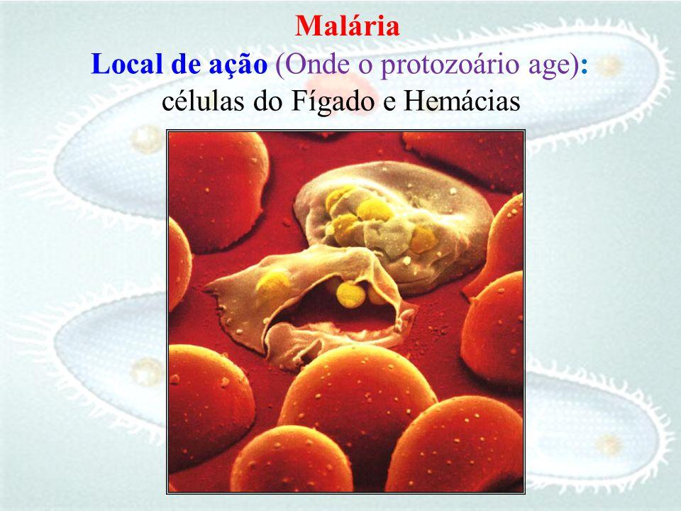 Local de ação células do Fígado e Hemácias (Onde o protozoário age):
