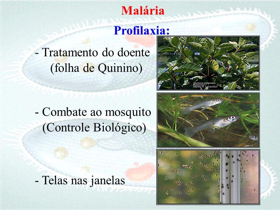 Profilaxia: - Tratamento do doente Malária (folha de Quinino) - Combate ao mosquito (Controle Biológico) - Telas nas janelas