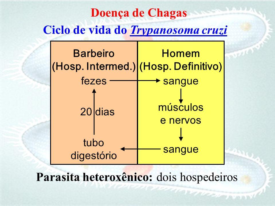 fezessangue 20 dias sangue tubo digestório músculos e nervos Ciclo de vida do Trypanosoma cruzi Barbeiro (Hosp. Intermed.) Homem (Hosp. Definitivo) Pa