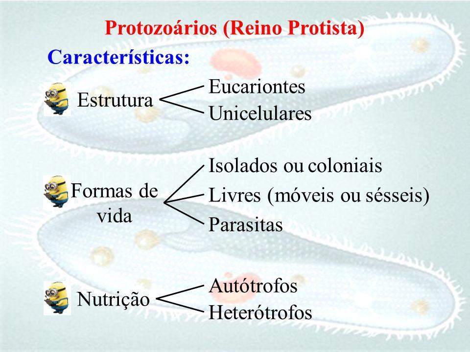 Características: Protozoários (Reino Protista) Unicelulares Eucariontes Estrutura Heterótrofos Autótrofos Nutrição Isolados ou Parasitas Formas de vid