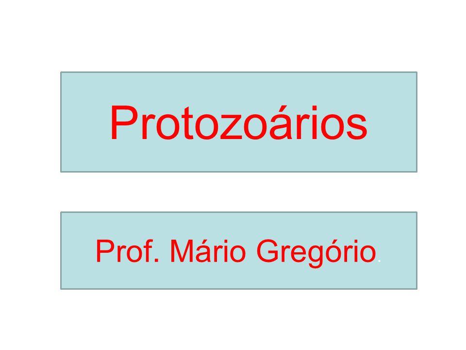 Protozoários Prof. Mário Gregório.