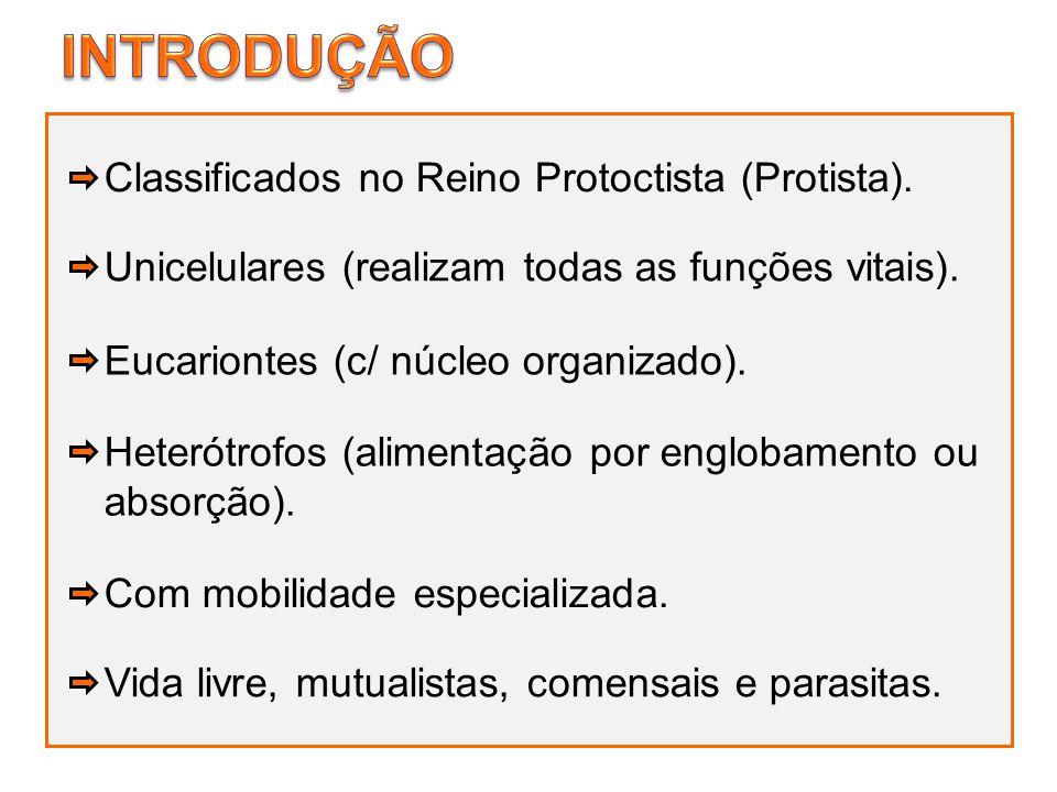 Classificados no Reino Protoctista (Protista). Unicelulares (realizam todas as funções vitais). Eucariontes (c/ núcleo organizado). Com mobilidade esp