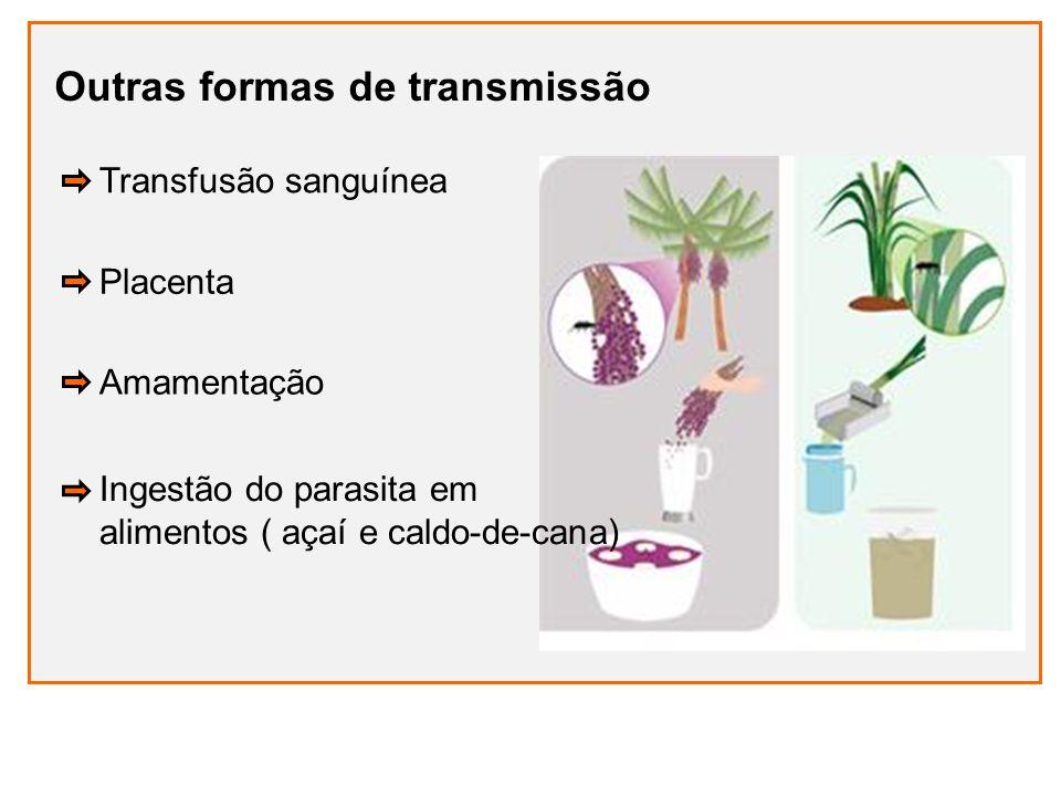 Outras formas de transmissão Placenta Ingestão do parasita em alimentos ( açaí e caldo-de-cana) Amamentação Transfusão sanguínea