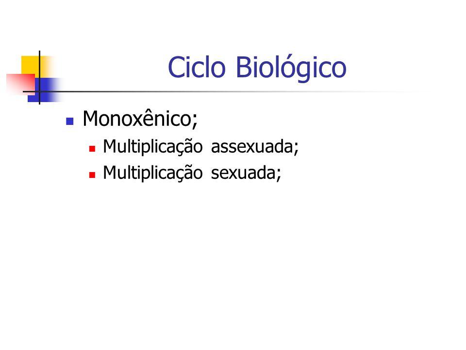 Ciclo Biológico Monoxênico; Multiplicação assexuada; Multiplicação sexuada;